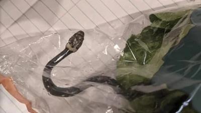 Kígyót talált az Aldi csomagolt salátájában egy vásárló