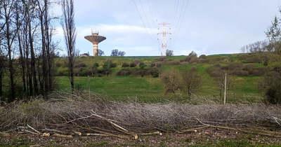 A vezeték miatt vágták ki a fákat