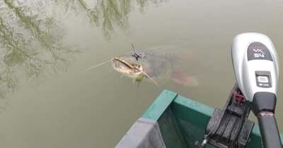 Nem a gigaharcsa volt az első nagy fogása a gyomaendrődi horgásznak