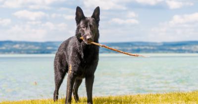 Kutyával a Balaton körül: erre számíthatsz, ha egy négylábúval együtt indulsz nyaralni