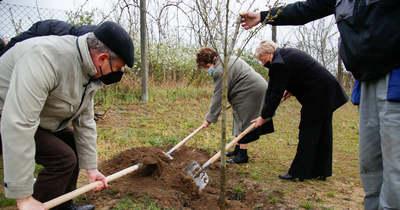 Őshonos fákat ültettek a rákóczifalvi általános iskola udvarára