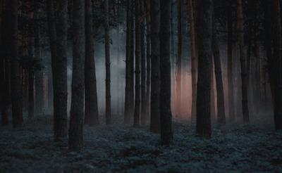 Rejtélyes haláleset: egy budapesti erdő szélén találtak rá az eltűnt férfira