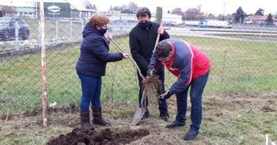 Törekednek a kecskeméti nagybani piac zöldítésére