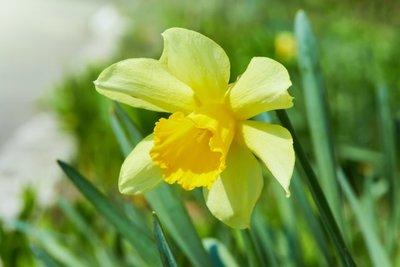 5 gyönyörű virág kertedből, amiről nem gondolnád, hogy súlyosan mérgező!