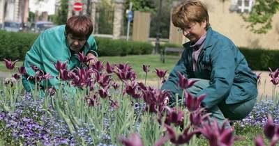 Virágos Székesfehérvár – a napokban kapnak időpontfoglaló e-mailt a pályázók
