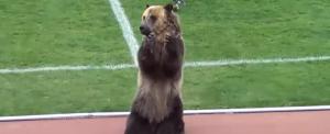 Medve vitte be a pályára a meccslabdát