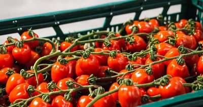 Már elérhetőek a hazai primőr zöldségek a piacokon, üzletekben