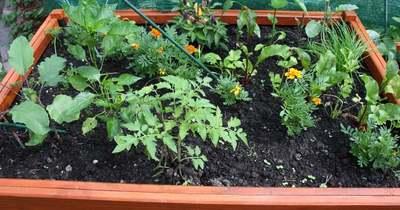 A palántaültetés, permetezés, talajelőkészítés ideje májusig