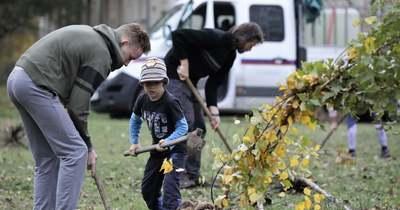Megyei probléma: a házunk előtti fa nem a miénk, még akkor sem, ha mi ültettük