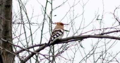 Egy ritka és védett madarat kaptak lencsevégre Kislángon