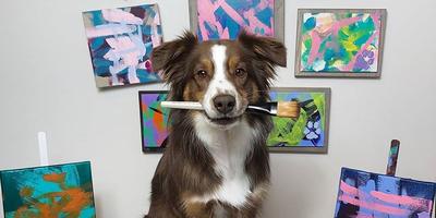 Elképesztő alkotásokat készít festőecsettel ez a kutya - Galéria