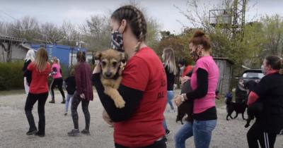 Kutyusokkal együtt ropják a Jerusalema tánckihívást a siófoki menhely önkéntesei – Videó!