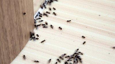 Támadnak a hangyák? – Ez a 3 trükk biztosan segít