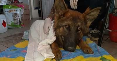 Jogerősen végrehajtandó börtönre ítélték a veszprémi állatkínzót