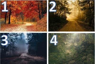 Melyik úton indulnál el az erdőbe? Választásod ezt árulja el rólad