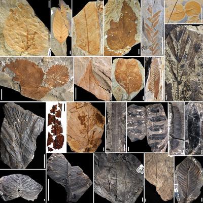 Megváltoztatta a trópusi esőerdők szerkezetét a 66 millió évvel ezelőtti aszteroidabecsapódás