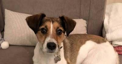 Hány tragédiának kell még történnie? Újabb kutya zuhant a mélybe a budavári kutyasétáltatónál – Fotók!