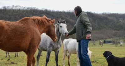 Állati jó helyen kezdenek új életet a négylábú túlélők