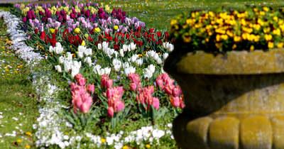 Tulipánmező Hévízen