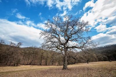 Galgamácsa mellett található a Pilis legújabb erdőrezervátuma