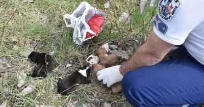Felháborító állatkínzás! Műanyag szatyorban dobták ki a kiskutyákat az út szélén – Fotók!