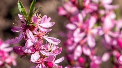 Visszavonhatatlanul itt a tavasz: megérkezett az évszak egyik hírnöke