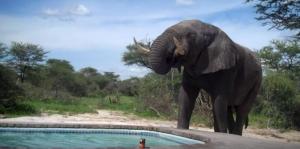 A nem várt fürdővendég (videó)