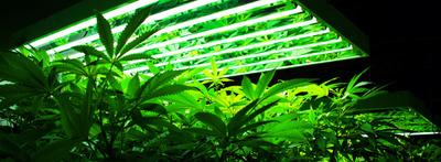 Évekig élt álnéven a szökésben lévő marihuána termesztő