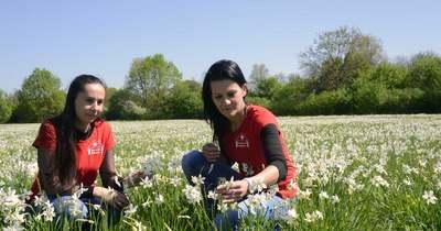 Milliónyi virág vonzza a turistákat Babócsára