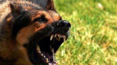 Jogosan lőtte agyon a rendőr a játszótéren gyerekre támadó kutyát? – felkavaró videó