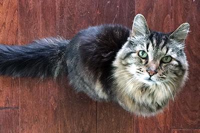 Ő az ország legöregebb cicája, a gulyásleves a kedvenc étele!