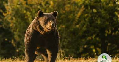 Európa legnagyobb medvéjét lőtte ki a herceg