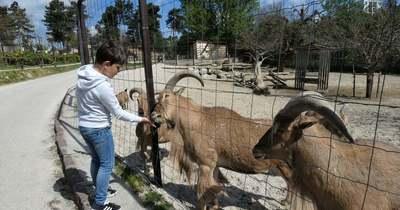 Újra várja a vendégeket a Veszprémi Állatkert