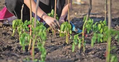 Aranyszabályok kertészkedőknek – palántázás