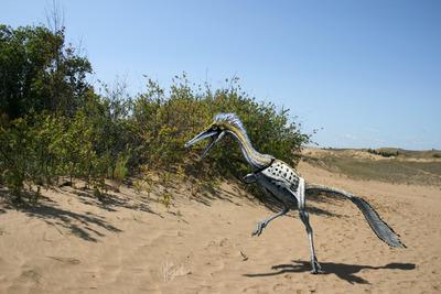 Különleges, éjszaka vadászó, madárszerű dinoszauruszt fedeztek fel