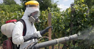 Nehéz helyzetbe kerülnek a szőlészetek is a vegyszer kivonása miatt