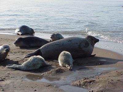 Legalább 170 elpusztult fiatal fóka vetődött a Kaszpi-tenger partjára