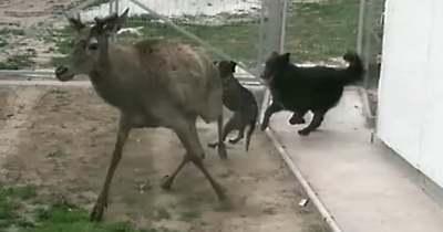Jogszerű a vadakra támadó gazdátlan kutyák kilövése