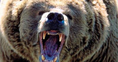 Döbbenetes tragédia: medvék tépték szét a gyönyörű nőt