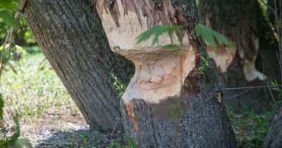 Megfigyelhetjük ezt az elkeserítő természeti rombolást