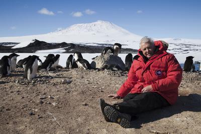95 éves a legendás ismeretterjesztő, Sir David Attenborough