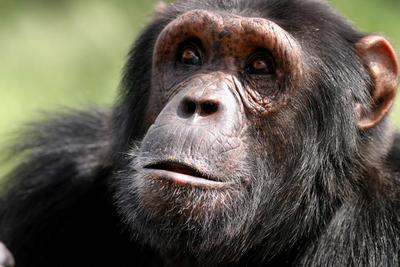 A gerinces állatoknak vannak érzelmeik - ezt most törvénybe is foglalják