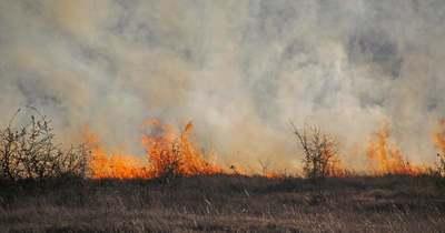 300 négyzetméteren lángolt a szemét Esztergomnál