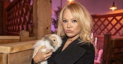 Pamela Andersonként orgiázik a Mamma Mia! sztárja