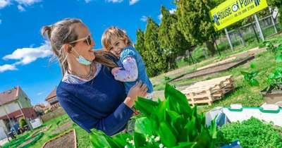 Az eper a favorit – Megnyitotta kapuit Győr-Moson-Sopron megye első közösségi kertje – galéria
