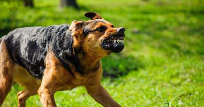 Megvadult kutya támadt a keszthelyi nőre, így szedték le a vérző áldozatról