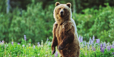 A legdurvább állati találkozások, amiktől meghűl a vér az ereidben