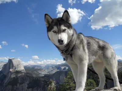 A gazdi személyisége befolyásolja a kutyák stresszállapotát