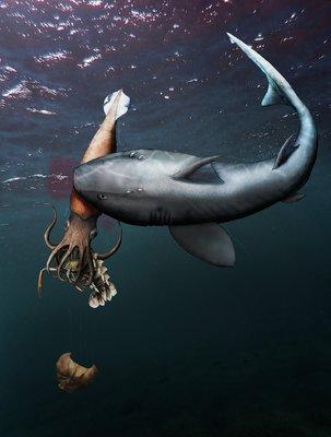 Éppen rákot evett a tintahal, amikor széttépte az ősi cápa