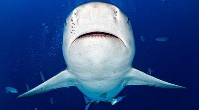 Cápával találta szembe magát a búvár – drámai fotók